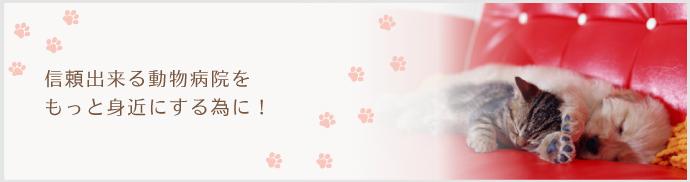 院長先生に相談してみよう 犬猫を買う前 RENSA