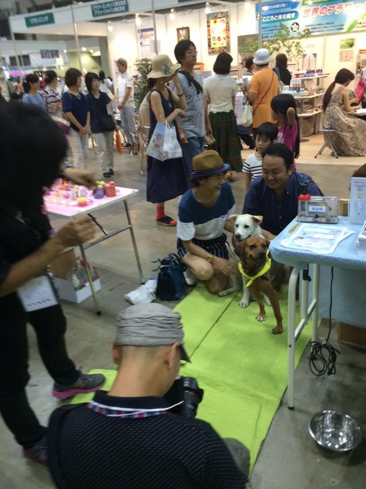 癒しフェア 保護犬 保護猫