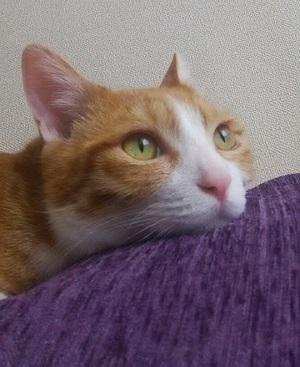 新井さん 猫1