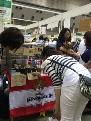 31日 paw pads 保護猫見る人 ●