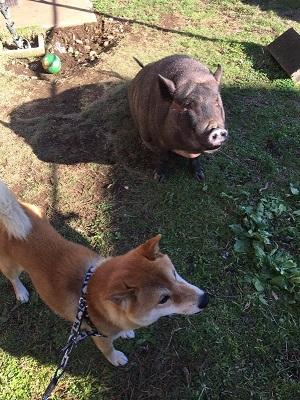犬猫を飼う前に読むサイト Rensa