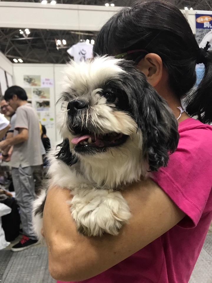 保護犬と佐藤さん★720