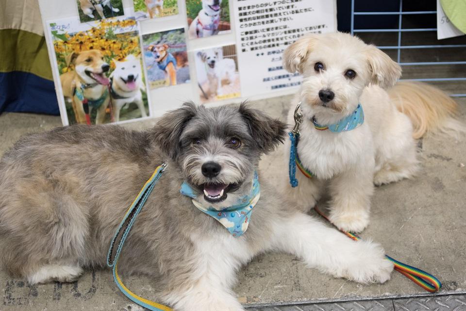 保護犬 犬2匹★960