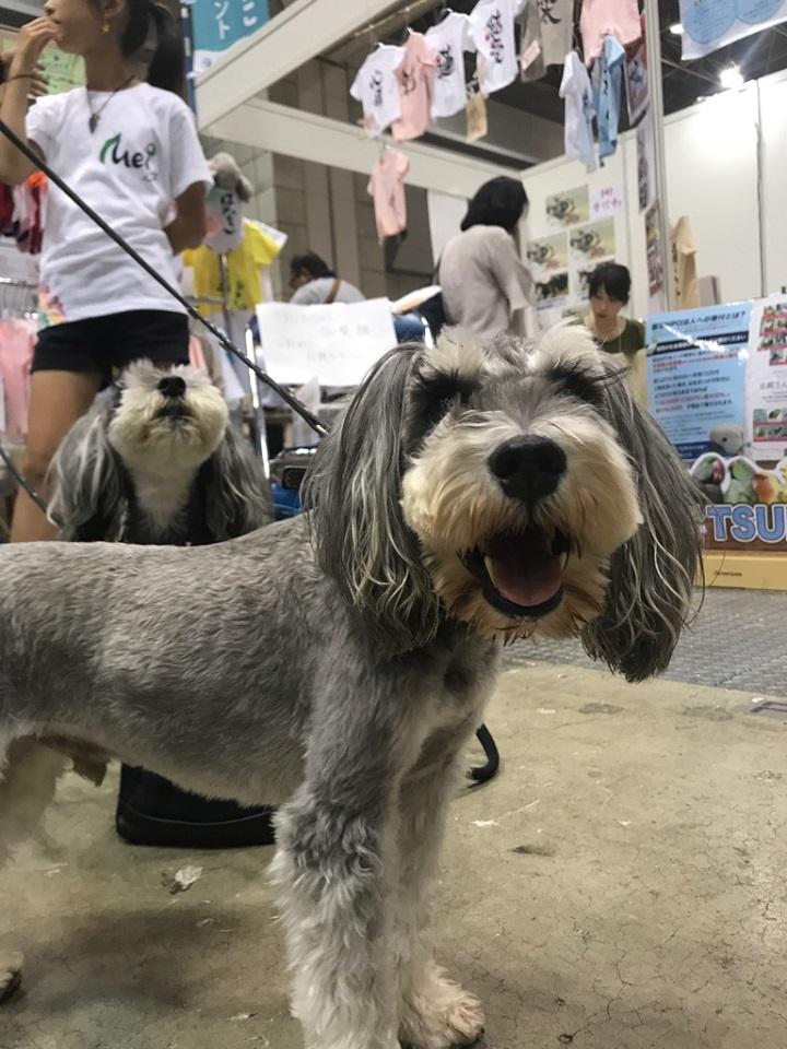 庄司社長の保護犬★720