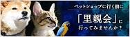 保護犬保護猫イベント情報