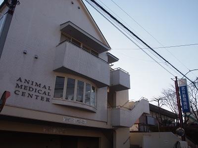 武井動物病院 田中院長2