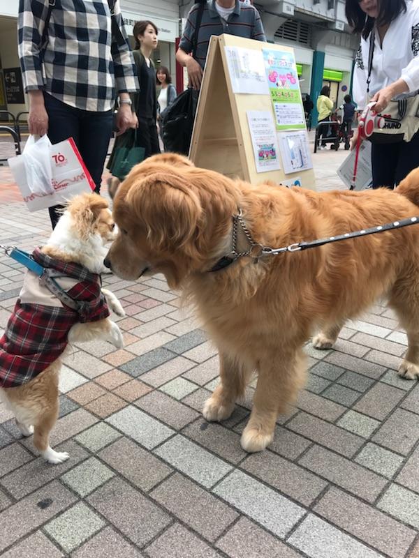 犬&ぬいぐるみ 2