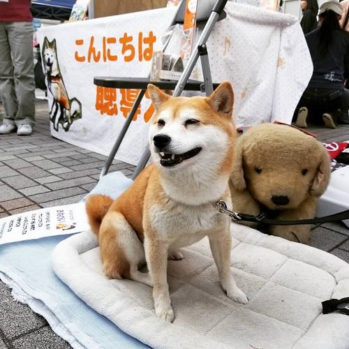 すまいるフェス 聴導犬