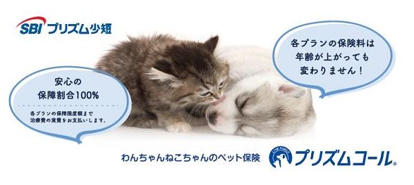 保護犬保護猫保険1